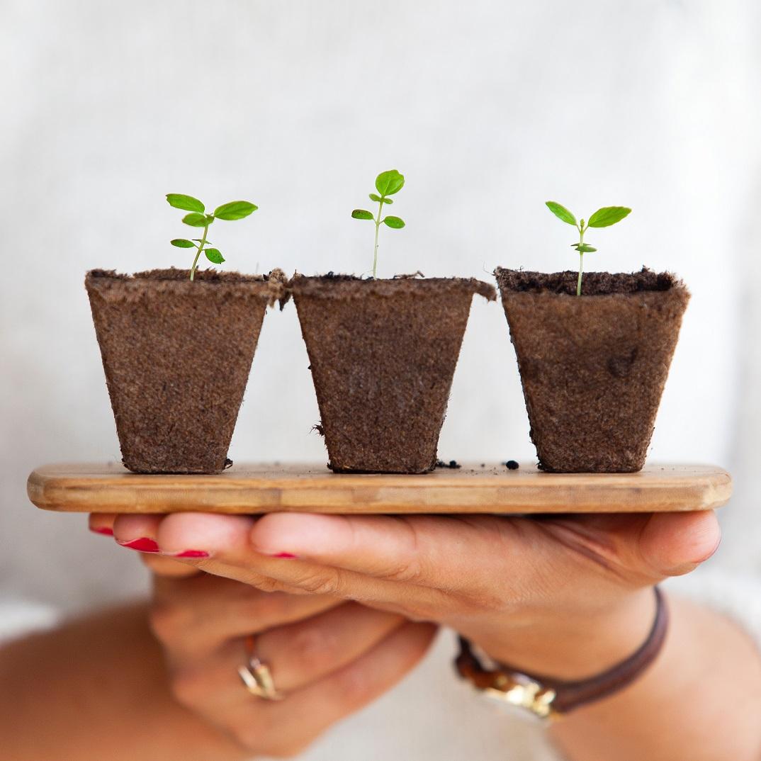 植物の新芽、新たに英語に挑戦イメージ